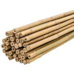 Donde Comprar Cañas de Bambu