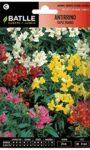 Flores Tapizantes